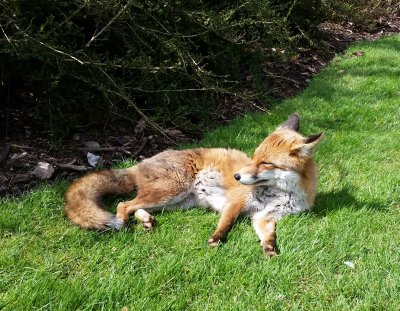 The Fox Hunt - Firefox and friends compared